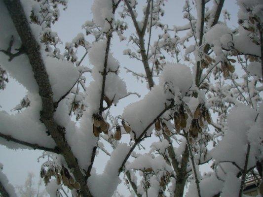 vinterträd 011