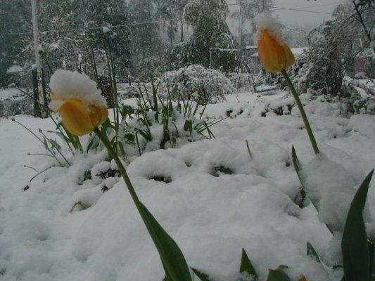våren har kommit igång 042