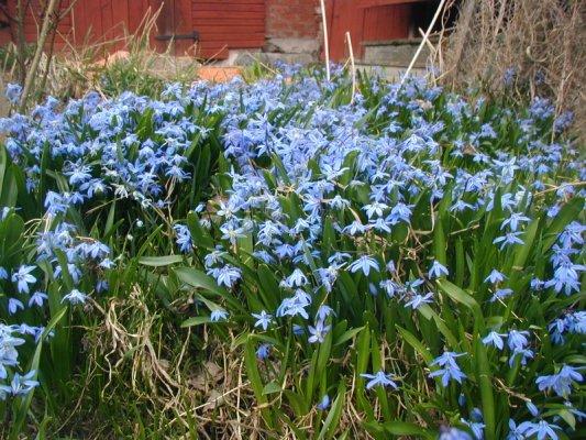 våren har kommit igång 004