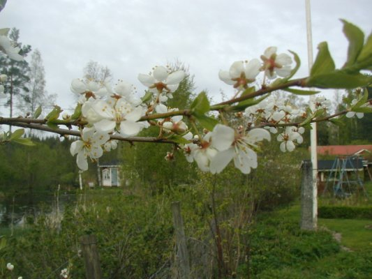 våren har kommit igång 057