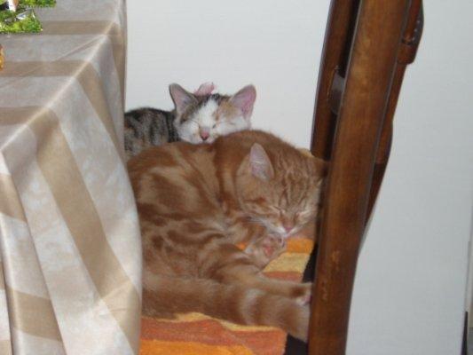 乖:嗯~這枕頭挺不賴的,就是毛多了點!