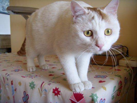 真正的原因就是,我不能容忍一个每几个月就在屋子里小便一圈的猫.