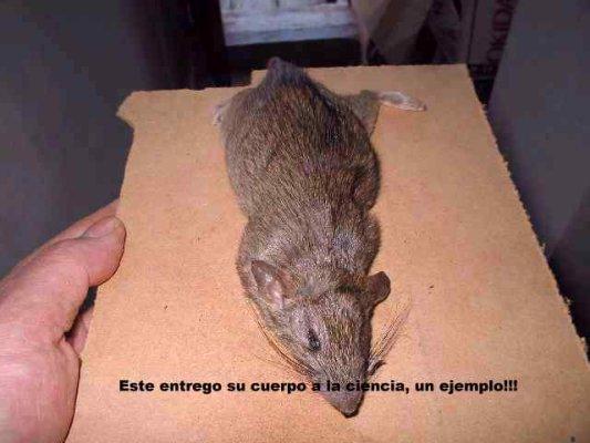 raton 002